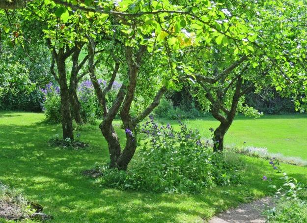 In Aino's garden