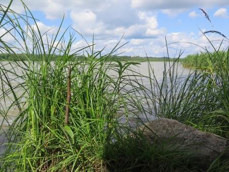Lake Tuusula (Photograph by J. Holford)