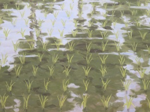 Berlind, Rice Paddy with Reflected Trees 2, detail, 2012
