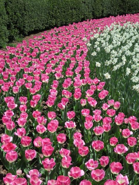 Central Park Conservatory Garden, April 23